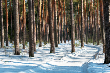 road in a snowy pine forest