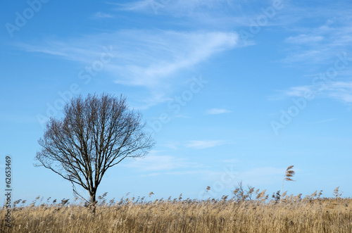 Alone tree in the reeds
