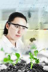 Scientist holding and examining samples plants