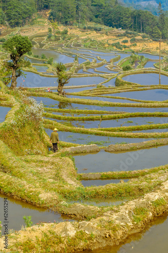 Rice terraces of Yuanyang, Yunnan, China