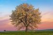 Alba primaverile:albero in fiore.-ITALIA-