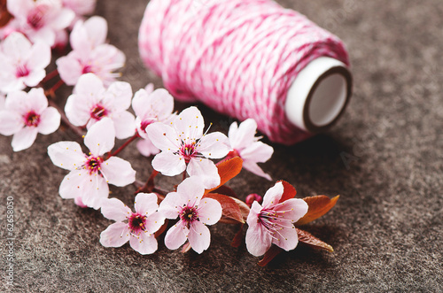pink blossoms, spring time