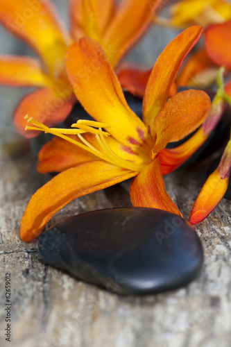 wild orange flower with black stones on old wood