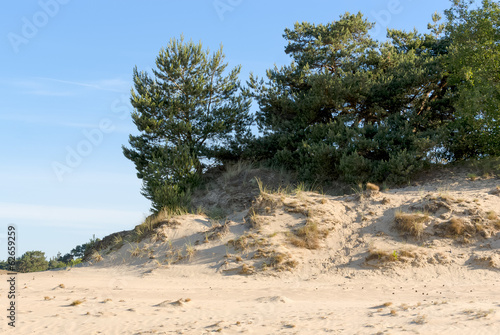 Sand-drift, trees and grass at kootwijkerbroek, netherlands