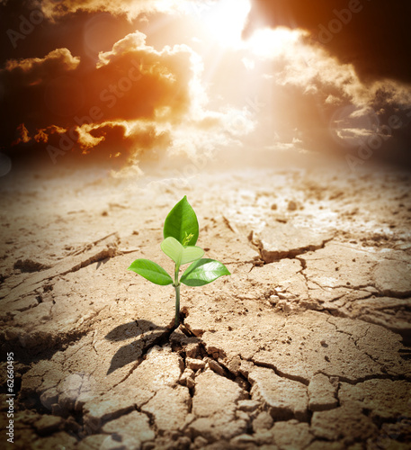 plant in arid land - climate warming and drought  concept - 62660495