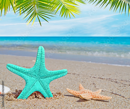 palm over a blue starfish