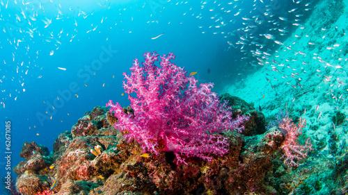 Fotobehang Koraalriffen similan11