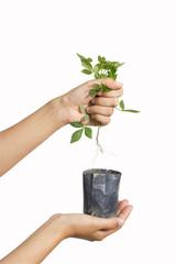 destroying plant