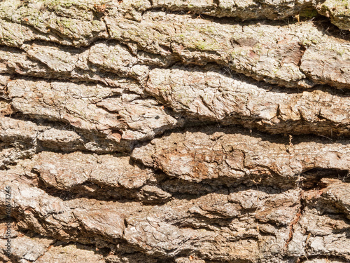 Tree Bark Patterns