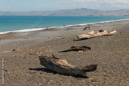 driftwood on beach in Cloudy Bay - New Zealand