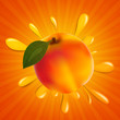 Vector Illustration of an Apricot Splash