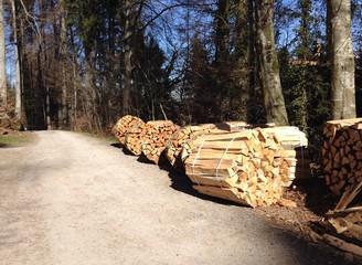 Holz im Wald