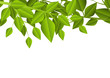 Green leaves background with place for Your text
