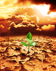 hope of new life in a destroyed environment from pollution