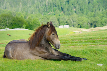 Horse Resting, Montenegro