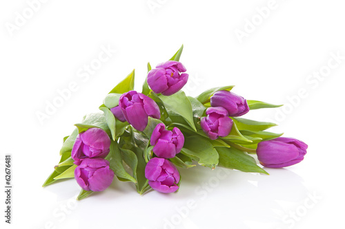 Bouquet of pink Dutch tulips