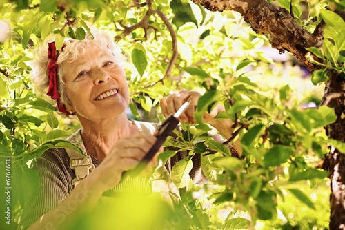 Senior woman pruning tree in garden