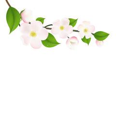 Pastel Apple Tree Flowers