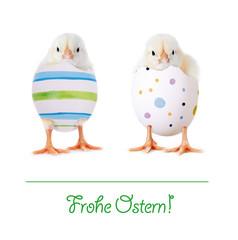 Frohe Ostern Küken