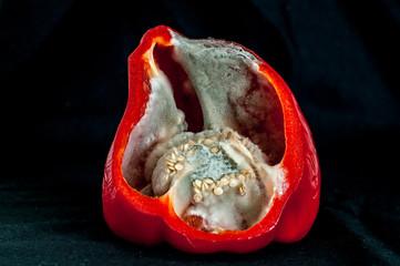 rotten pepper