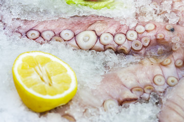 Fresh octopus tentacles on ice with sliced lemon