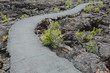 A Paved Pathway Through The Lava Fields Of The Craters Of The Moon National Monument And Preserve In Butte County Idaho. Sagebrush Plants Growing.