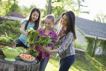 Organic Farm. Summer Party. Two Young Girls And A Young Adult Preparing Salad Leaves For A Buffet.