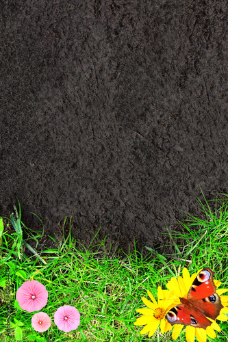 Nature background with green grass and soil
