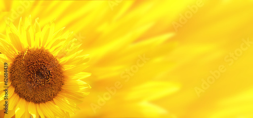 Foto op Aluminium Madeliefjes Banner with sunflower