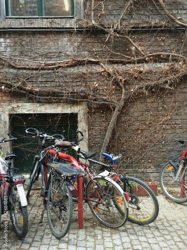 ivy wall