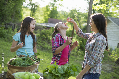 Organic Farm. Summer Party. A Woman Feeding A Young Girl Fresh Picked Cherries.