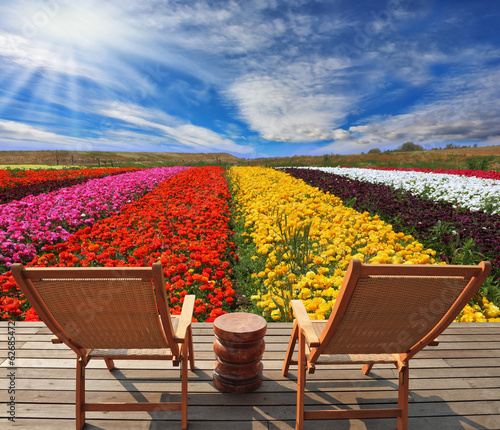 Very beautiful bright multi-colored flower fields