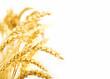 Leinwanddruck Bild - Getreideähren, isoliert auf weiß