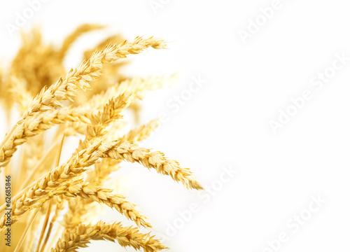Leinwanddruck Bild Getreideähren, isoliert auf weiß
