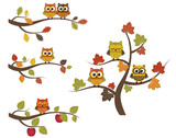 Fototapety Fall owls on branches