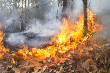 Destroyed by burning tropical forest ,Thailand