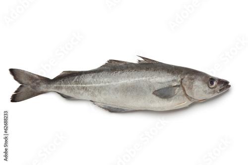 Fresh atlantic pollock fish - 62688233