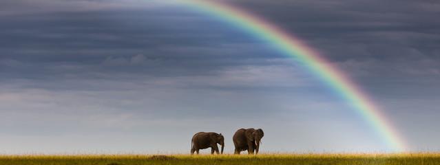 Afrika, Kenia,  afrikanischen Elefanten in Masai Mara National Park