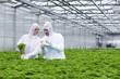 Deutschland, München, Wissenschaftler im Gewächshaus untersucht Petersilie Pflanze