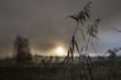 Deutschland, Bayern, Blick auf Schilf im Nebel