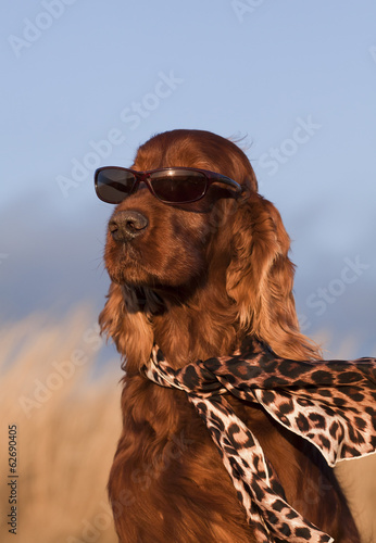 Funny dog with sunglasses and scarf