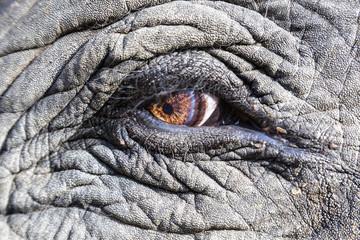 Indien, Madhya Pradesh, Nahaufnahme der asiatischen Elefanten Auge in Kanha National Park