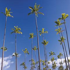 USA, Hawaii, Kauai, Blick auf Palme