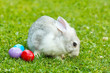 White easter rabbit in green grass