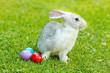 White easter rabbit in green grass