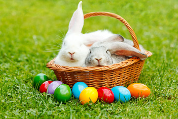 White and gray rabbit in wicker basket with colorful easter eggs