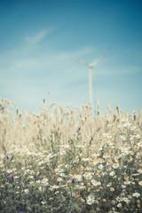 Deutschland, Sachsen, Ansicht der Windkraftanlage in Maisfeld