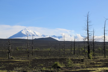 Вулканическое плато