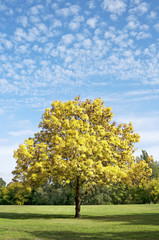 Yellow autumn tree in the park vertical