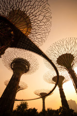 Silhouette of Supertree at Gardens by the Bay